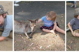 Collage of children petting kangaroos