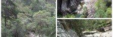 Tamborine Mountain - collage